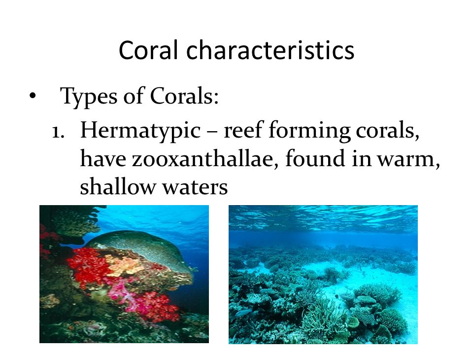 the main characteristics of coral reefs Threats to coral reefs despite many corals' rock – like appearance, they are actually very fragile and easily damaged by both direct and indirect threats.
