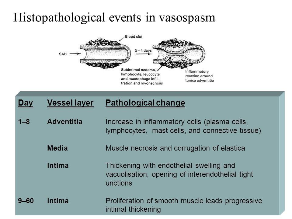 Histopathological events in vasospasm