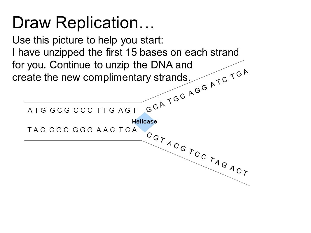 Draw Replication… Use this picture to help you start:
