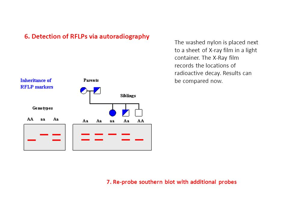 "Dda Line Drawing Algorithm Solved Example : Dna profile analysis is based on the use of ""southern"