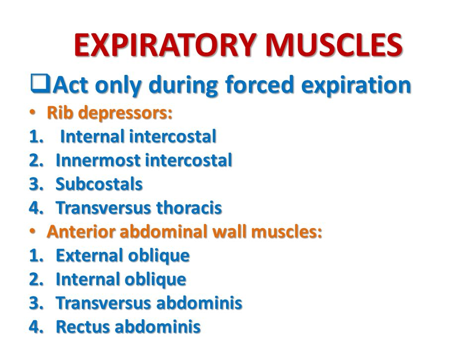 EXPIRATORY MUSCLES Act only during forced expiration Rib depressors: