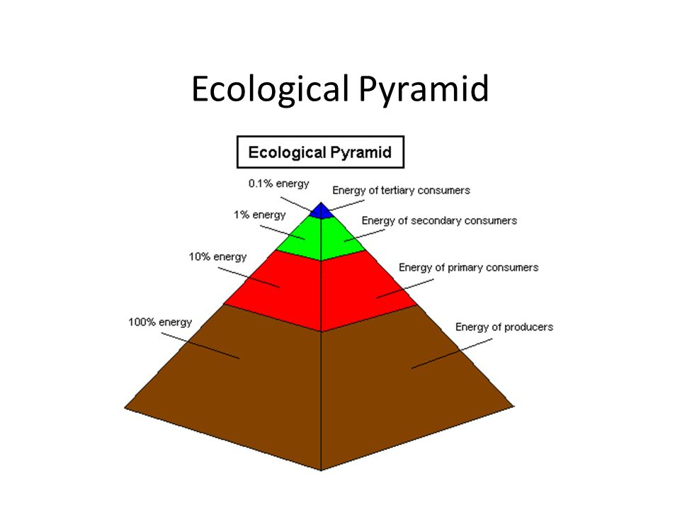 ecological pyramids In this paper, we investigate the trophic pyramid structure of 17 commonly studied  ecosystems (terrestrial and varying aquatic environments.
