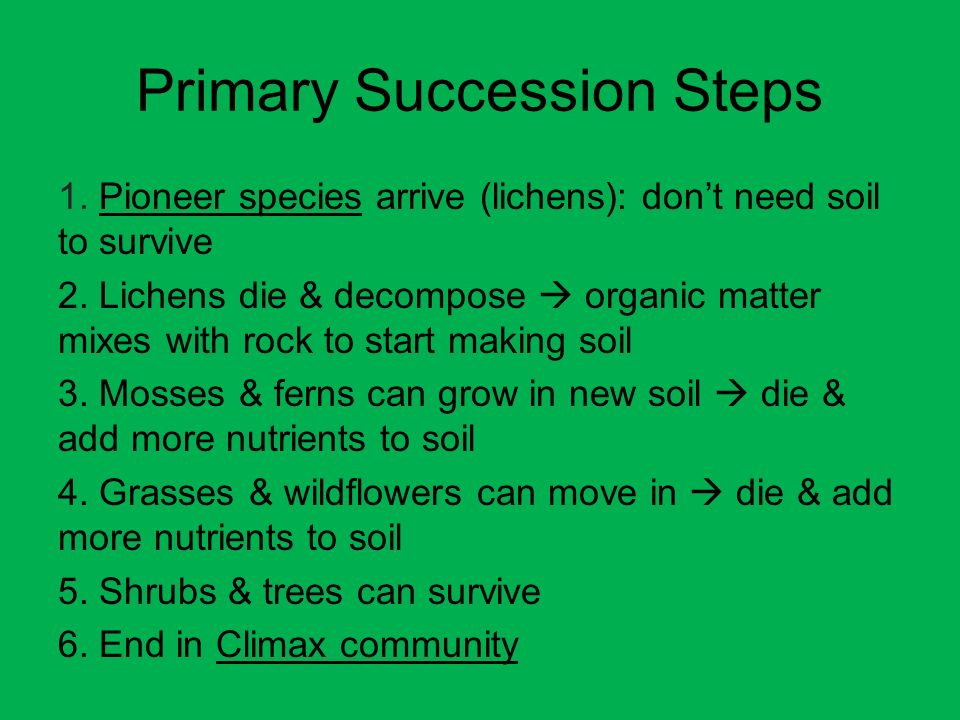 Primary Succession Steps