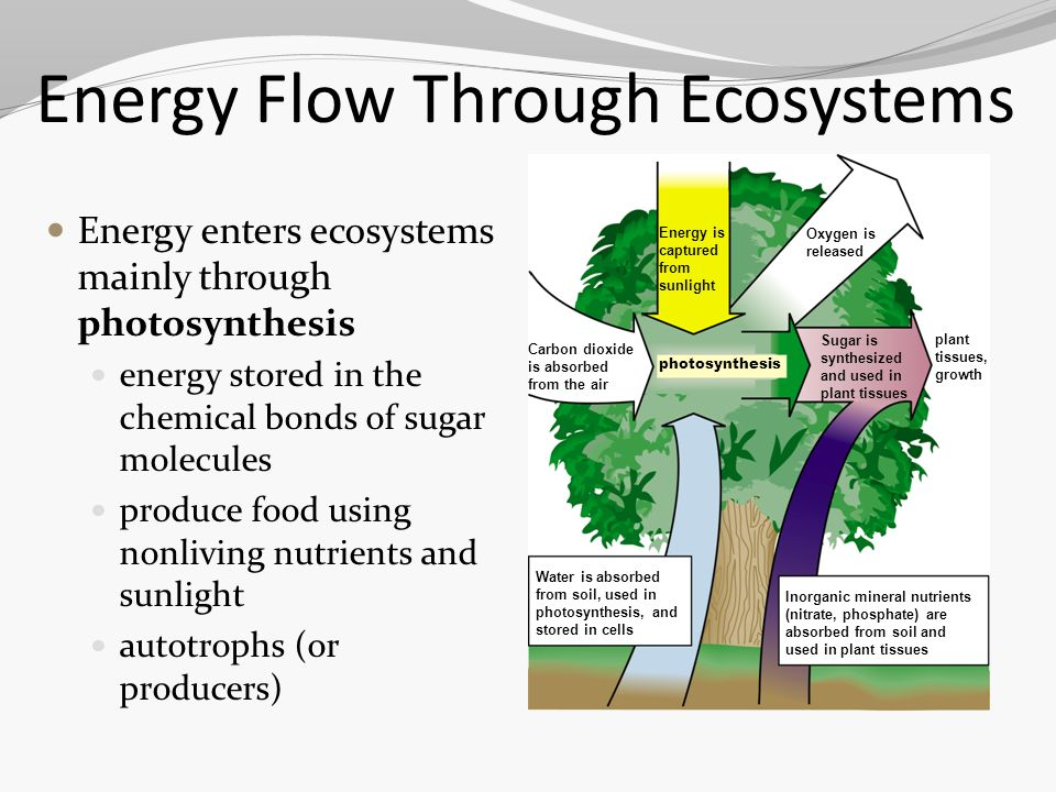 Patterns of Flow of Energy through the Ecosystems | Essay