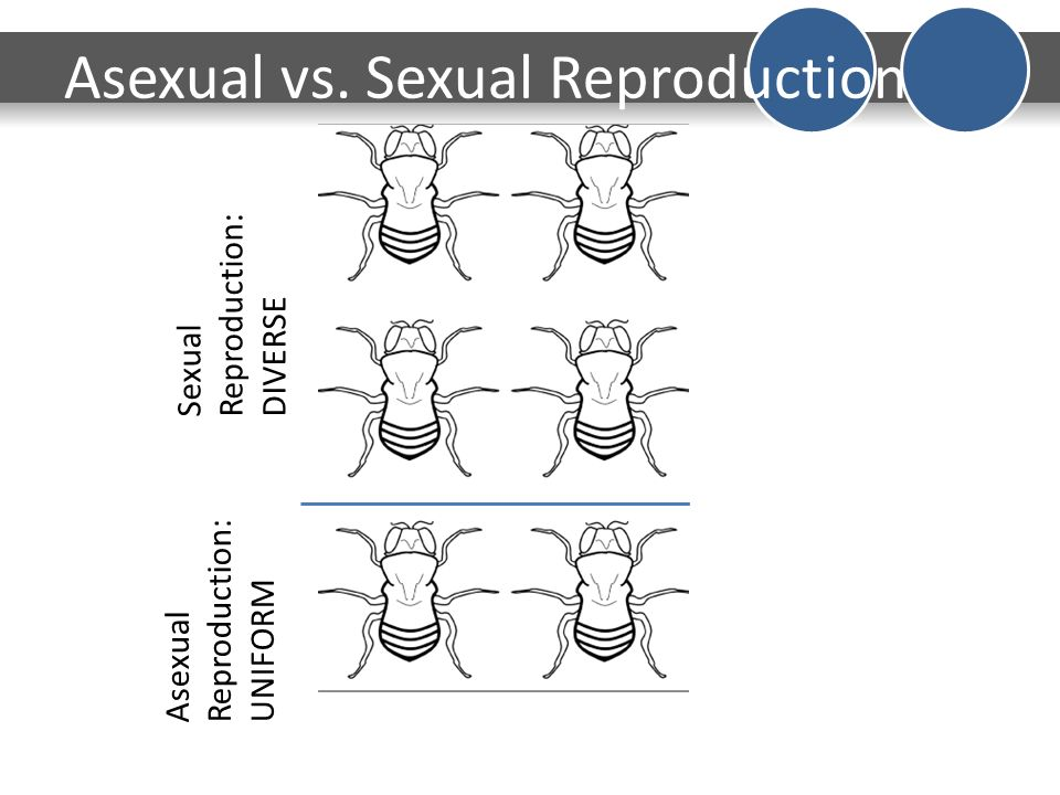 7th Grade Science DO NOW Oct 19 2015 Date 1019 DO NOW ppt – Asexual Vs Sexual Reproduction Worksheet