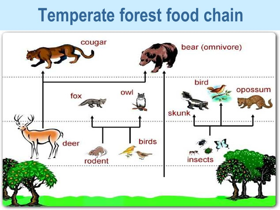 Can You Find A Food Chain With  Organisms
