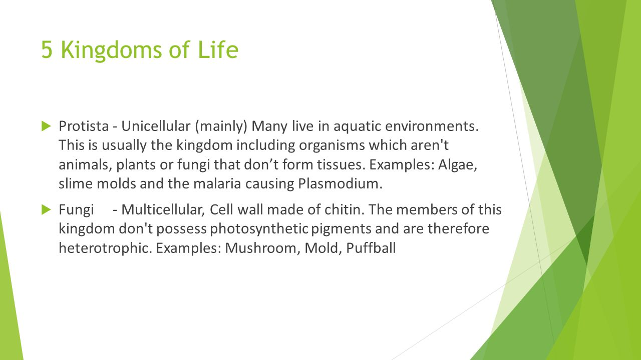 five kingdoms of life essay Free review on life kingdoms study the kpcofgs classification of life and all phyla reading questions and answers.