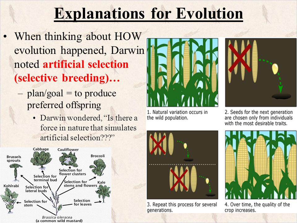 Natural Selection Variation Adaptation Speciation Competition Overproduction