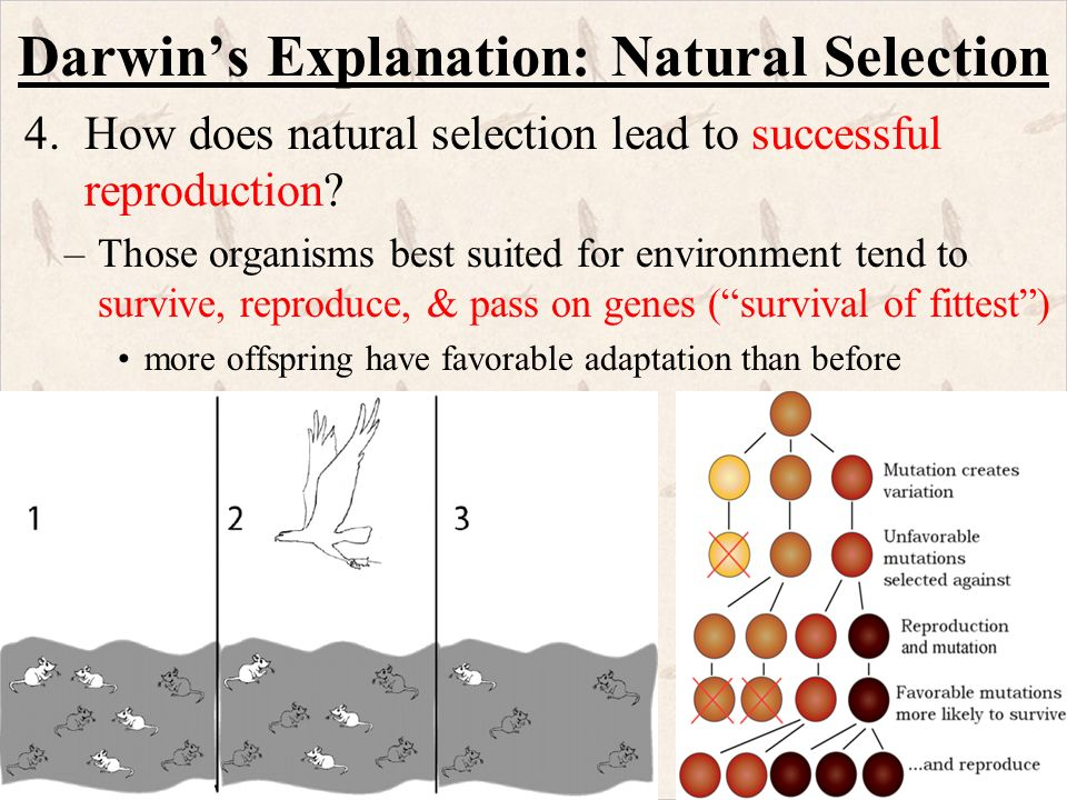 Pepper Moths Natural Selection Game