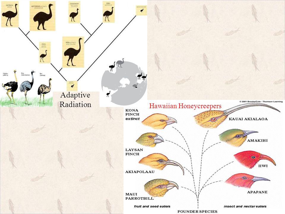 ch 12 evolution amp ch 13 adaptation amp speciation ppt