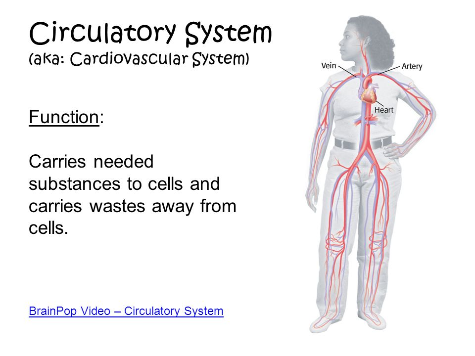 Images of Circulatory System Function - #SpaceHero