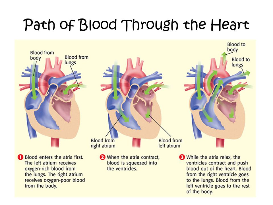 9699182 on blood circulatory system ppt