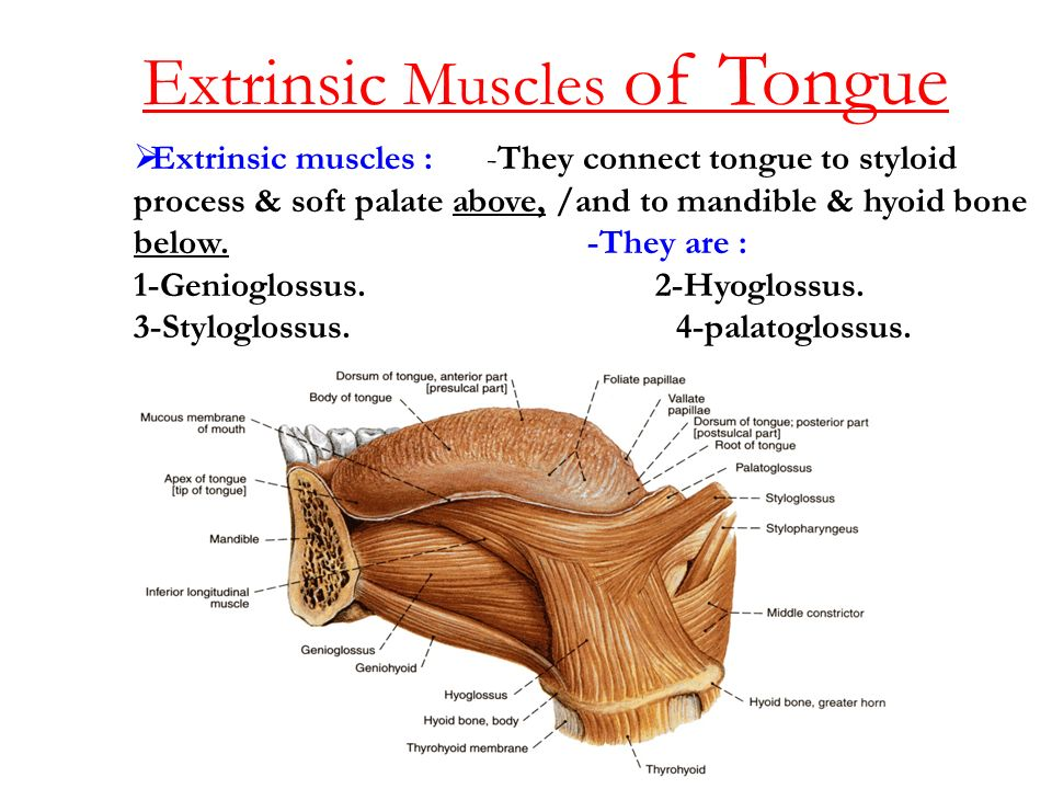 amount of instruction and tip of the tongue phenomenon Cleary has also studied the phenomenon known as tip of the tongue view all the latest top news in the social sciences & education, or browse the topics below.