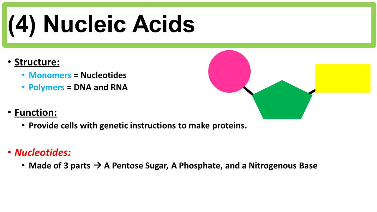 """1 nucleic acid structure and function What is the difference between nucleotide and nucleic acid  structure and composition, function,  1 lodish, harvey """"structure of nucleic acids""""."""
