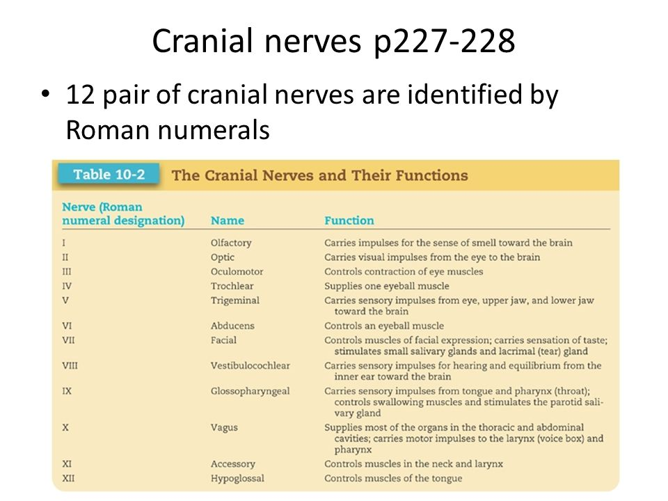 12 pairs of cranial nerves pdf
