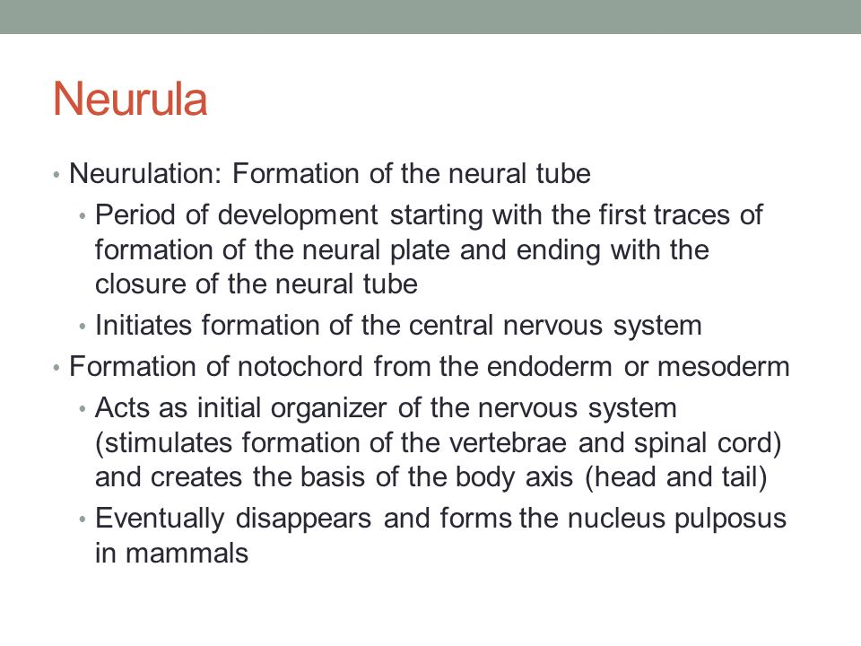 neurulation and the formation of axial Neurulation in the cranial region – normal and abnormal failure of neurulation at that axial brain formation is achieved by neurulation progressing.