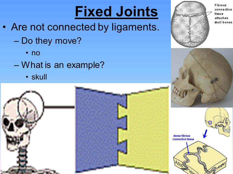 Unit 18 (Ch. 14) Support & Movement - ppt video online ...