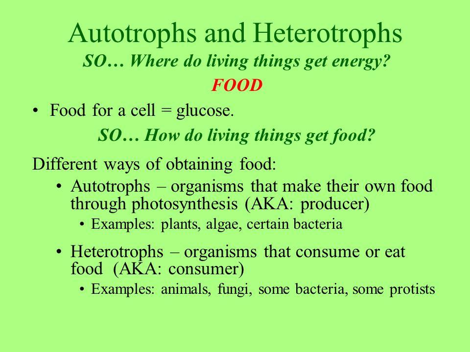 autotrophs and hetertrophs