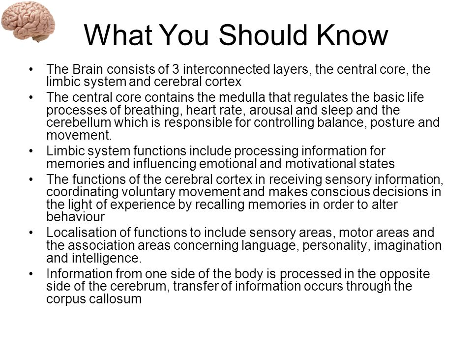 central core of the brain compared to cerebral cortex Start studying central core learn vocabulary, terms, and more with flashcards, games, and other study tools  •a set of interconnected nuclei that are located throughout the brain stem.