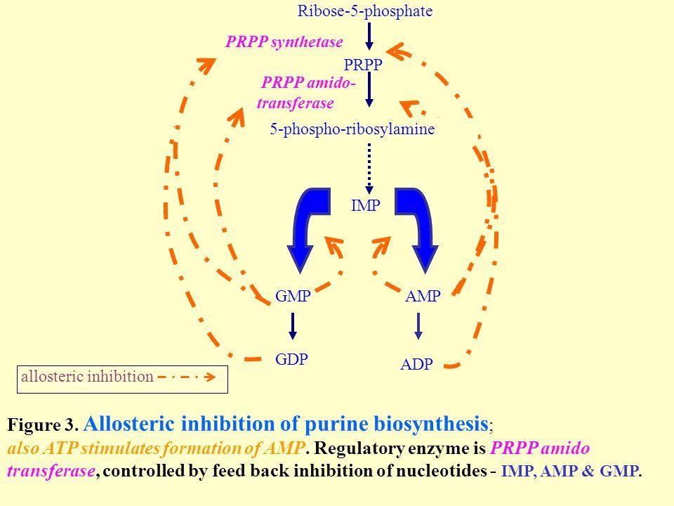 metabolism of purine nucleotides amp ppt video online download