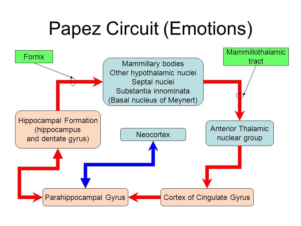 papez circuit function