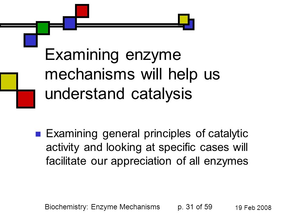 an examination of enzymes