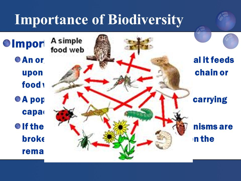 Importance Of Food Chain And Food Web In Nature