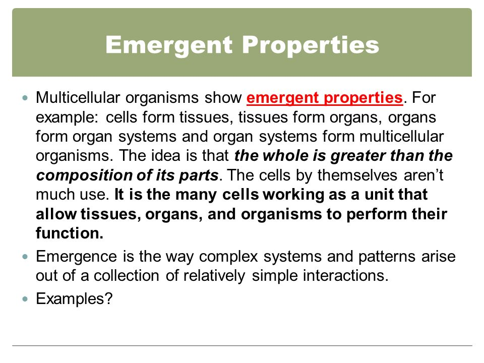 Division Of Labor How A Multicellular Organism Gets From Single Cell