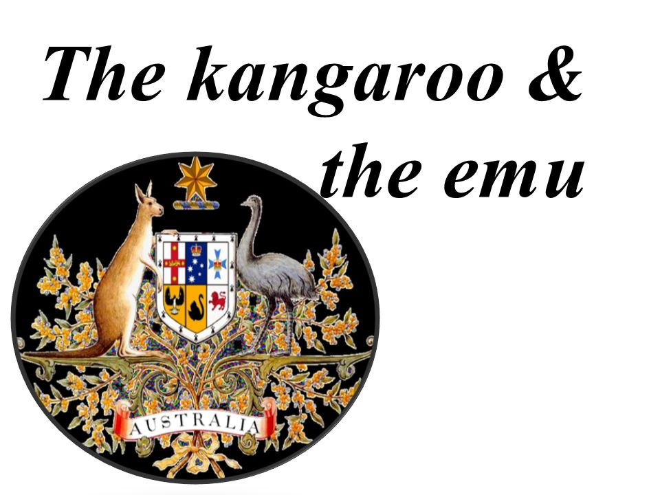 The kangaroo & the emu /