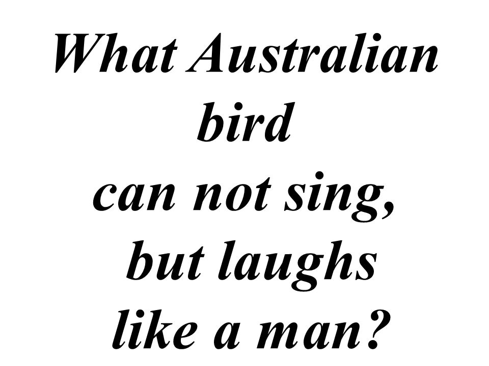 What Australian bird can not sing, but laughs like a man