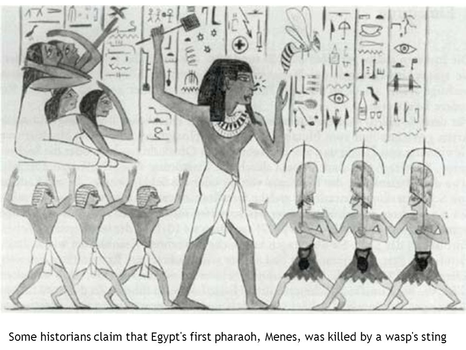 Some historians claim that Egypt s first pharaoh, Menes, was killed by a wasp s sting