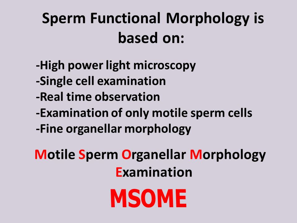 Who classification for sperm morphology