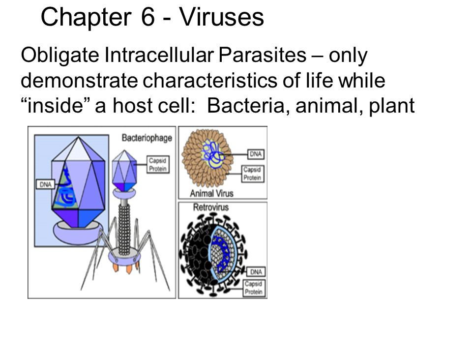 Intracellular parasite examples.