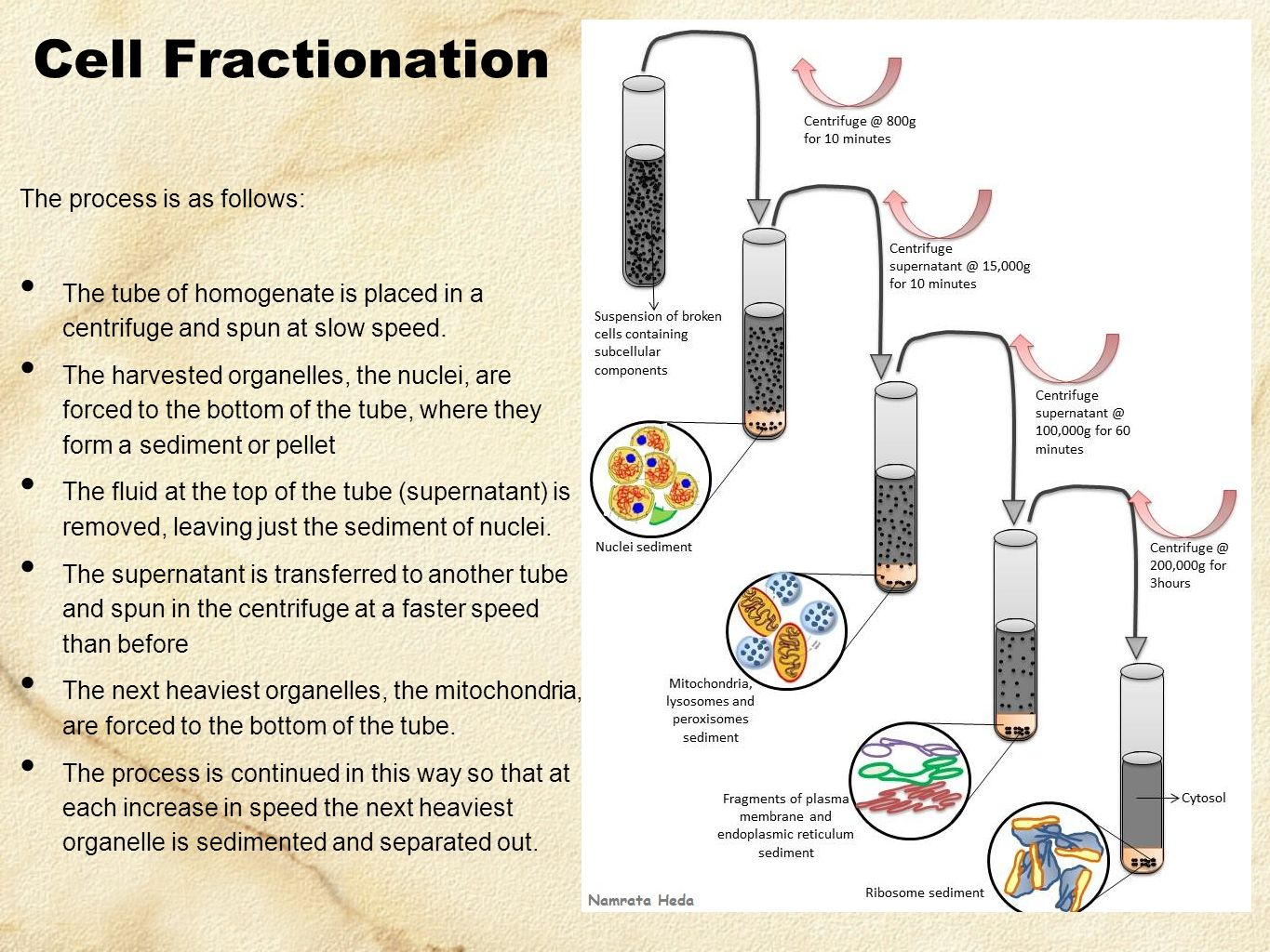 what is fractionation Speciation and fractionation of elements definitions, structural aspects, and  methodological approaches (iupac recommendations 2000) abstract: this  paper.