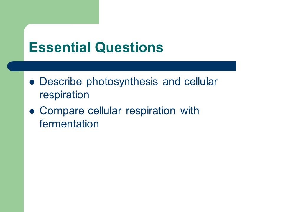 photosynthesis and cellular respiration essay questions Besides, it is recommended to read several free sample essays on photosynthesis and cellular respiration in the web at essaylibcom writing service you can order a custom essay on photosynthesis topics your essay paper will be written from scratch.