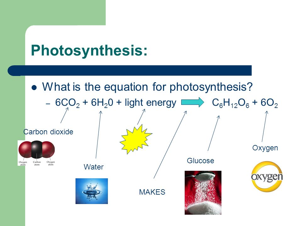 word equation for photosythesis Word equation for photosynthesis photosynthesis is used by plants in order to create sugar for energy the raw materials include carbon dioxide and water then add sunlight and glucose and oxygen are created.
