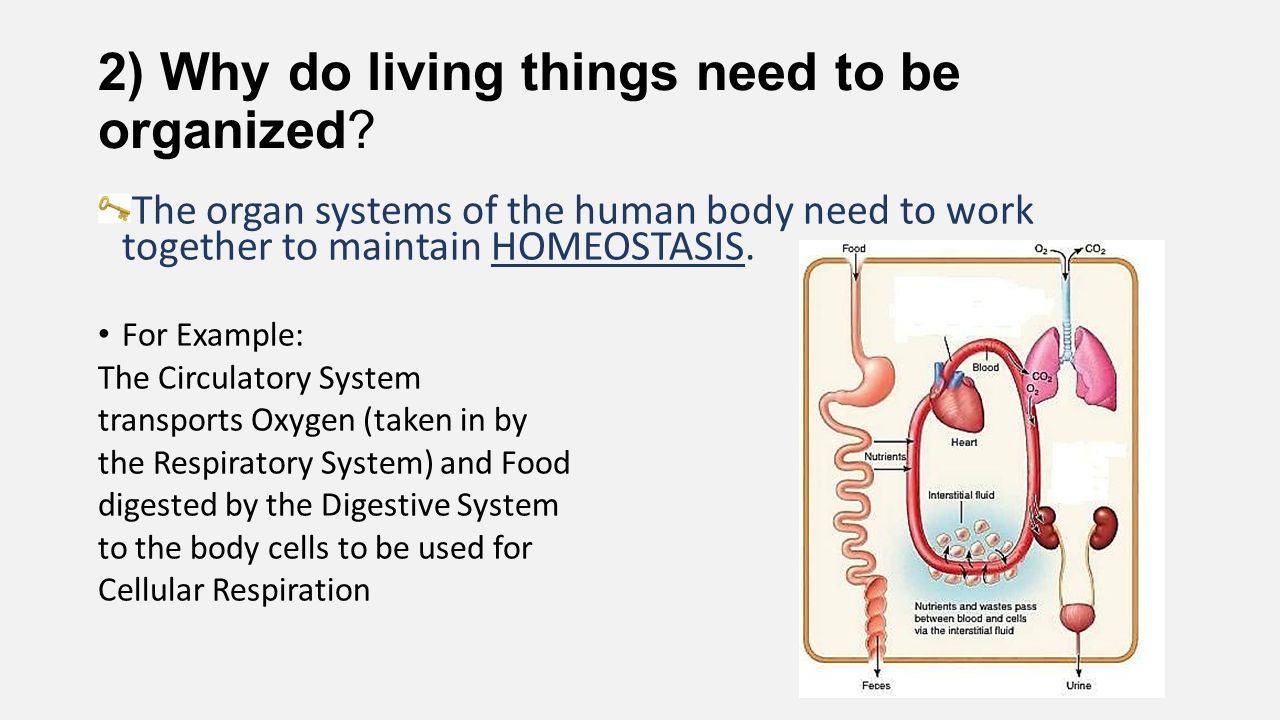 why do living things need energy All living things require a source of energy, nutrients, water, space to grow and reproduce, and a relatively stable environment that allows homeostasis many organisms also require oxygen.