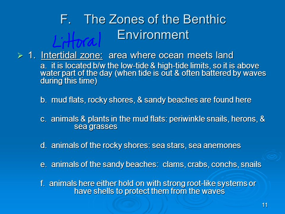 The Zones of the Benthic Environment