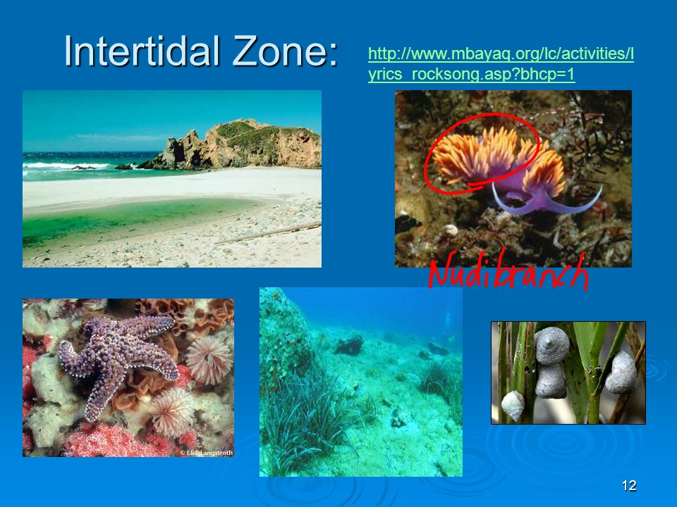 Intertidal Zone: http://www.mbayaq.org/lc/activities/lyrics_rocksong.asp bhcp=1