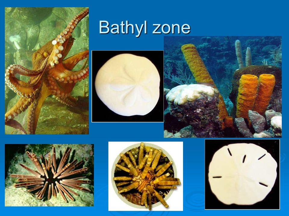 Bathyl zone