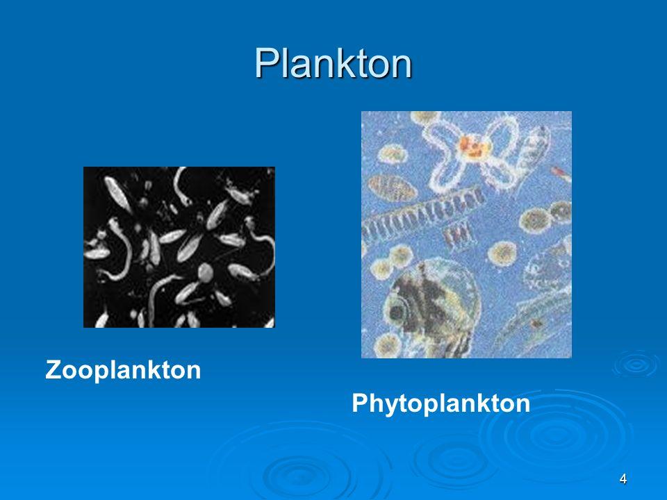 Plankton Zooplankton Phytoplankton