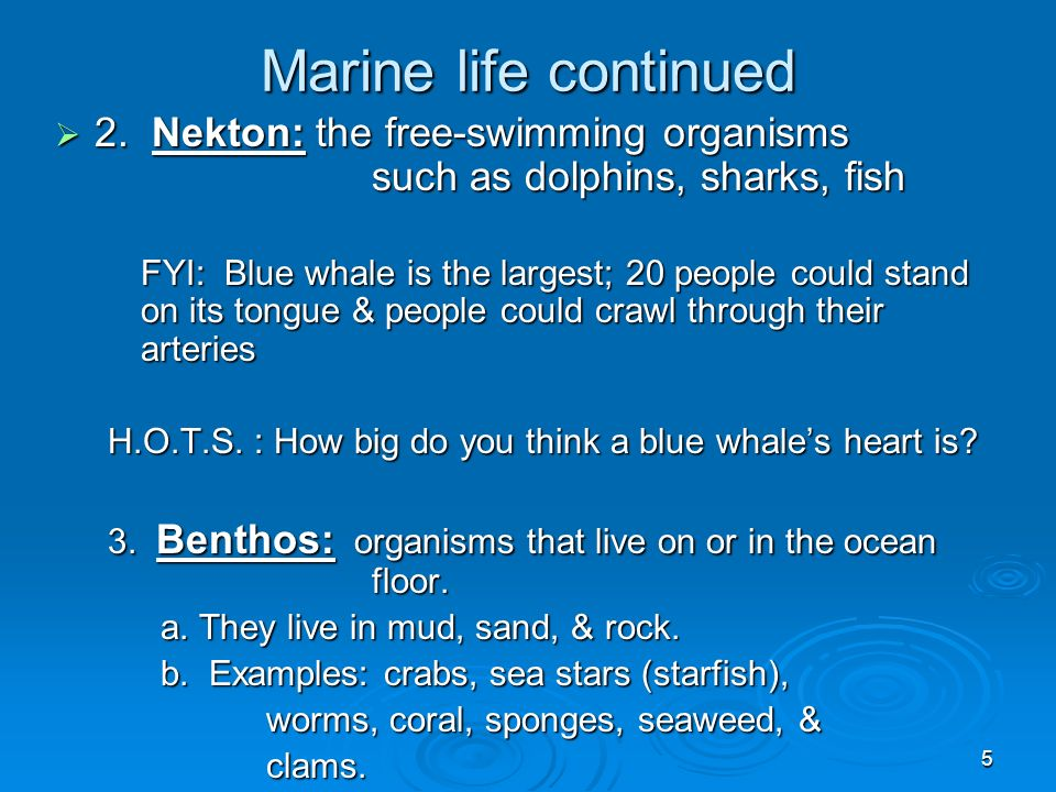 Marine life continued 2. Nekton: the free-swimming organisms such as dolphins, sharks, fish.