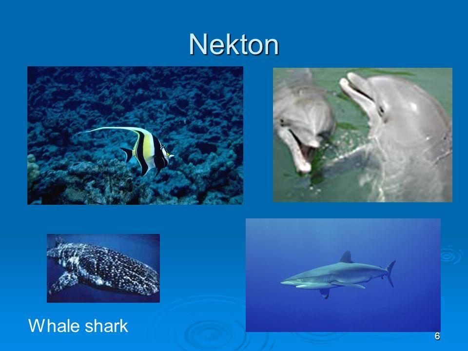 Nekton Whale shark