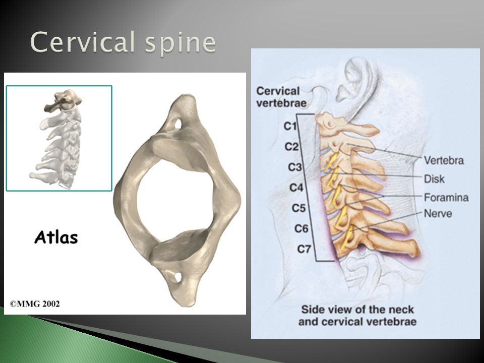 An orthopaedic overview - ppt video online download