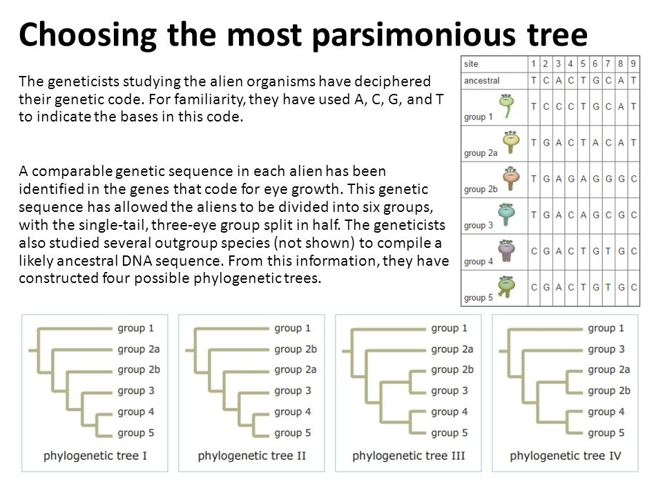 Choosing the most parsimonious tree