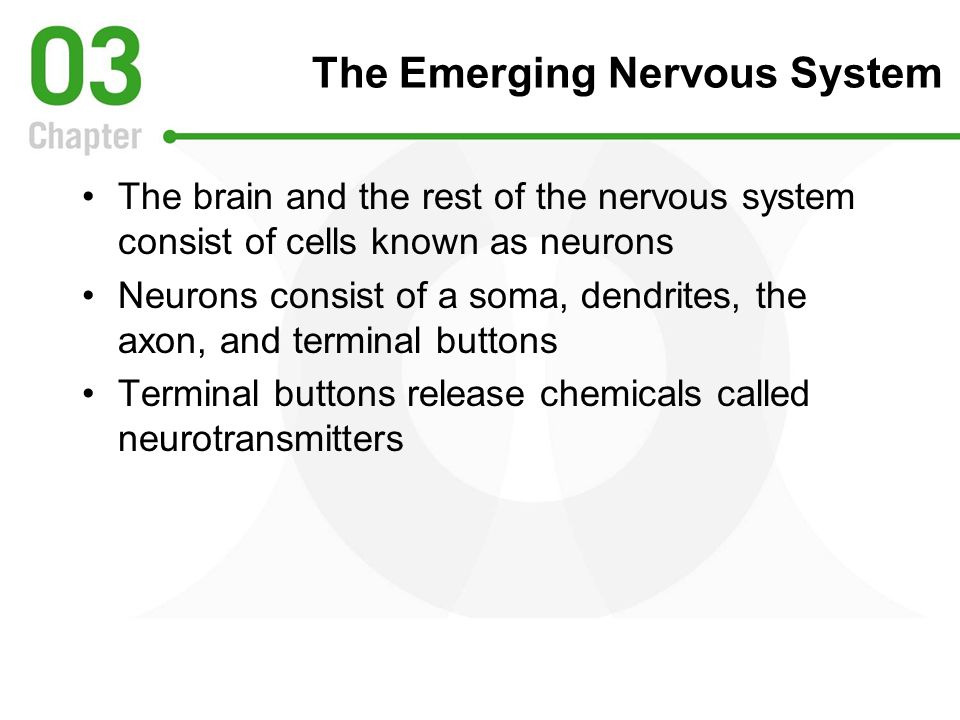 The Emerging Nervous System