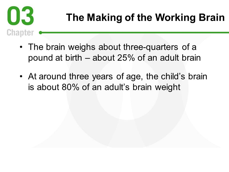 The Making of the Working Brain