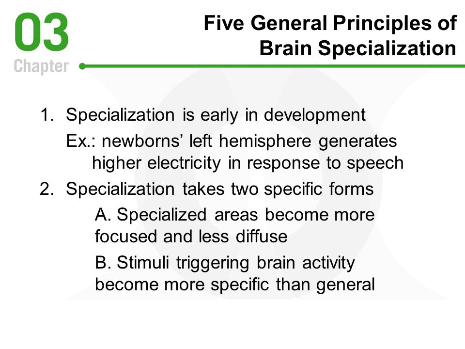 Five General Principles of Brain Specialization