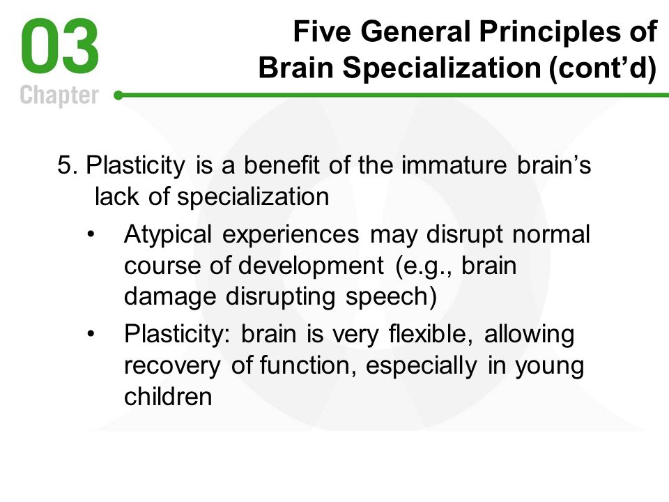 Five General Principles of Brain Specialization (cont'd)