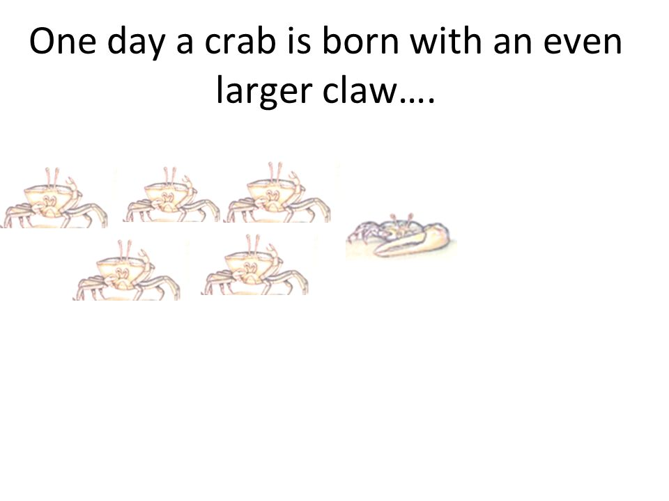One day a crab is born with an even larger claw….